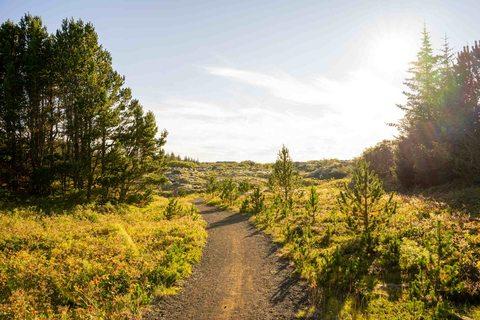 Wanderweg im Naturschutz- und Naherholungsgebiet Heiðmörk