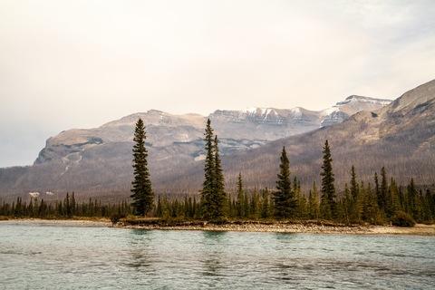 Verbrannter Wald an der Saskatchewan River Crossing